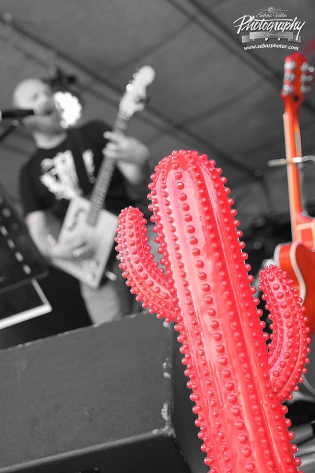 redcactus 5bis