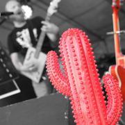 Redcactus5 n b
